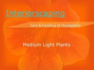 Medium Light Plants