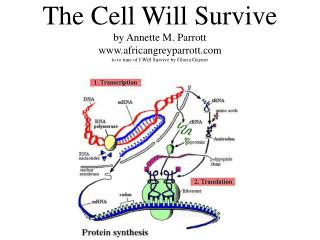 The Cell Will Survive by Annette M. Parrott africangreyparrott to to tune of I Will Survive by Gloria Gaynor