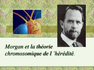 Morgan et la th orie chromosomique de l  h r dit .