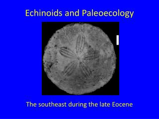 Echinoids and Paleoecology