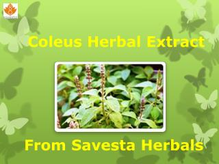 Coleus Herbal Extract from Savesta Herbals
