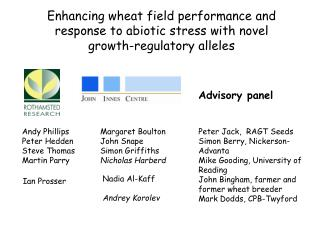 Enhancing wheat field performance and response to abiotic stress with novel growth-regulatory alleles