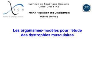 mRNA Regulation and Development