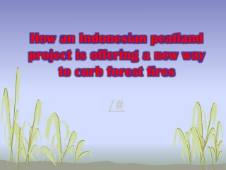 How an Indonesian peatland project is offering a new way to