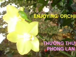 ENJOYING  ORCHID