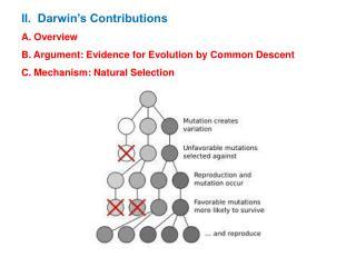 Dawkins: Evolution of the Camera Eye