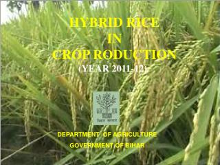 HYBRID RICE