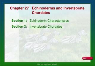 Section 1:   Echinoderm Characteristics