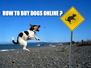 How to Buy a Dog Online?