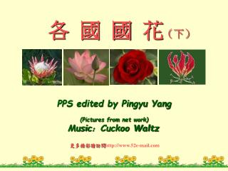 PPS edited by Pingyu Yang(Pictures from net work)