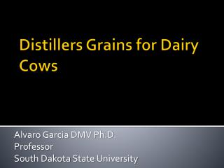 Distillers Grains for Dairy Cows