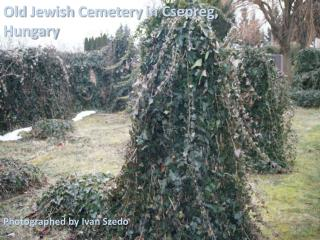 Old Jewish Cemetery in Csepreg, Hungary