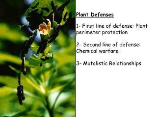 Physical Defenses