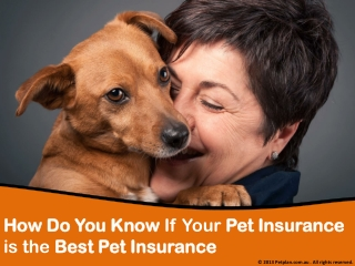 How do you know if your pet insurance is the best pet insura