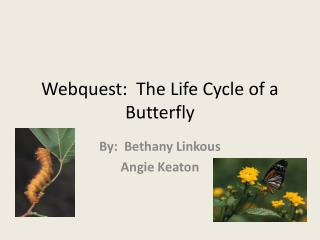 Webquest:  The Life Cycle of a Butterfly