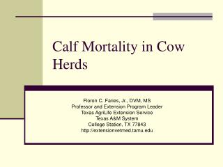 Calf Mortality in Cow Herds