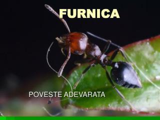 FURNICA