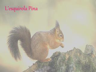L'esquirola Pina