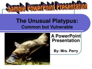 The Unusual Platypus: