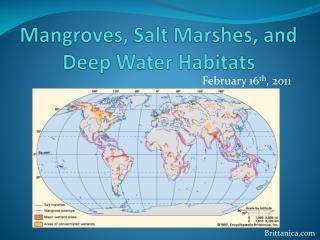 Mangroves, Salt Marshes, and Deep Water Habitats