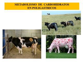 METABOLISMO  DE  CARBOHIDRATOS EN POLIGASTRICOS