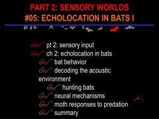 Pt 2: sensory input  ch 2: echolocation in bats  bat behavior  decoding the acoustic environment  hunting bats  neural m
