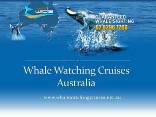 jetcruiser whale watching cruises australia