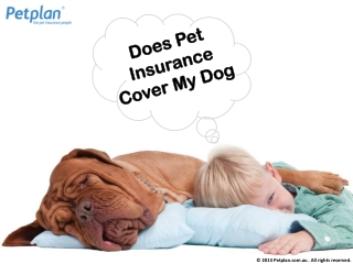 Does Pet Insurance Cover My Dog?