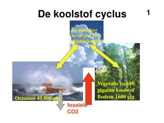 De koolstof cyclus