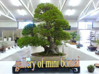 gallery of mini bonsai