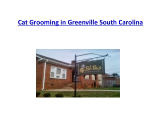 Cat Grooming in Greenville South Carolina