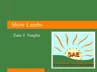 Show Lambs