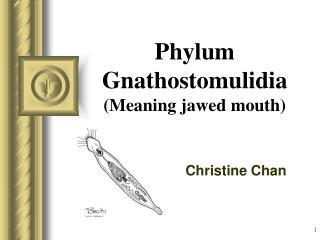 Phylum Gnathostomulidia Meaning jawed mouth