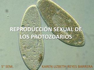 REPRODUCCIÓN SEXUAL DE LOS PROTOZOARIOS