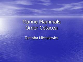 Marine Mammals Order Cetacea