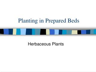 Planting in Prepared Beds