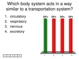 Which body system acts in a way similar to a transportation system
