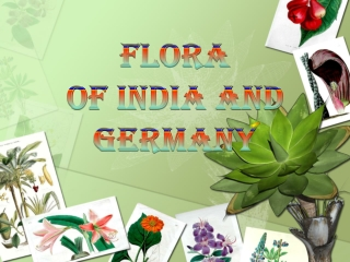 tural vegetation and wildlife of india and germany 90.pptx
