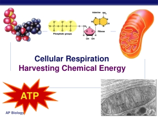 Cellular Respiration: How Cells Harvest Chemical Energy