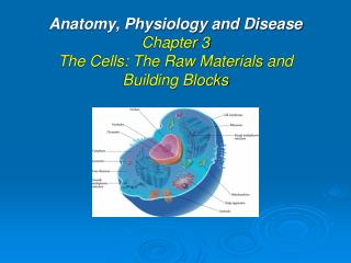 Anatomy, Physiology and Disease  Chapter 3 The Cells: The Raw Materials and Building Blocks