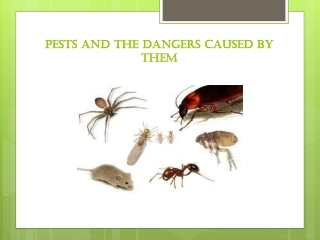 Eco-friendly pest control in Adelaide