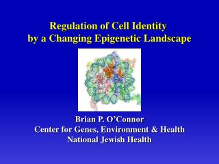 Brian P. O Connor Center for Genes, Environment  Health National Jewish Health