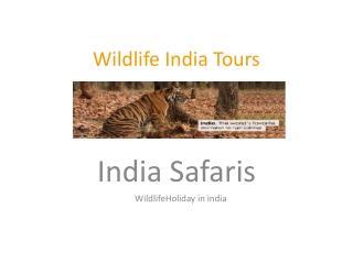 Wildlife India Tours