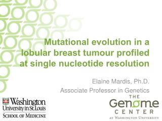 Mutational evolution in a lobular breast tumour profiled at single nucleotide resolution