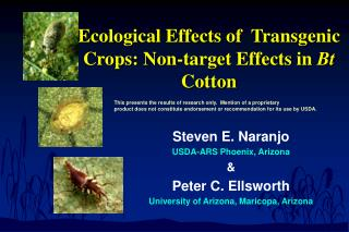 ecological effects of  transgenic crops: non-target effects in bt cotton