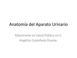Anatom a del Aparato Urinario