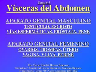 V sceras del Abdomen  APARATO GENITAL MASCULINO TEST CULO. ESCROTO V AS ESPERM TICAS. PR STATA. PENE  APARATO GENITAL FE