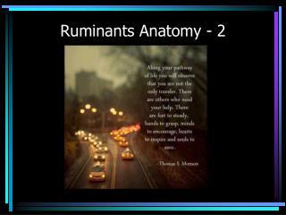 Ruminants Anatomy - 2