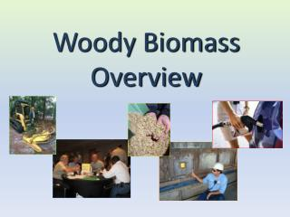 Woody Biomass Overview