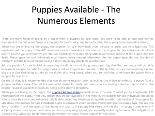 puppies for sale miami
